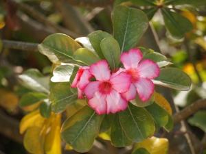 @godlywoman911 pretty pink flower
